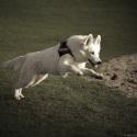 Project 52 fotos van je hond