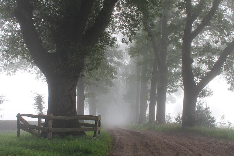Mistige ochtend - mistige start van de dag bij Dalfsen