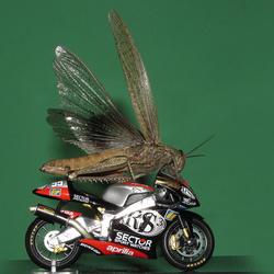 flying on wheels