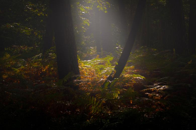 lichtinval - de ochtendzon die de nevel verdrijft in het mastbos bij Breda ,de zon komt mooi door een opendeel van de boomtoppen.<br /> ik heb de fot