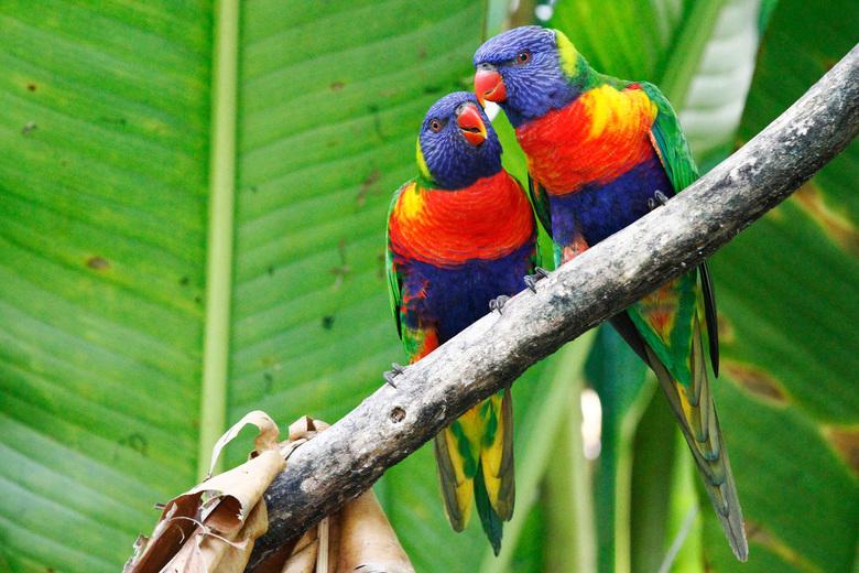 vogels bij Wild lands