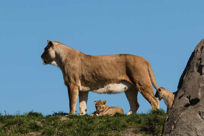 Moeder met kinderen -
