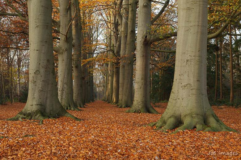 Blad - Als je het bos in gaat liggen de meeste bladeren nu wel op de grond. Het vormt vaak een prachtig tapijt op de bodem van het bos. Zo ook in dit