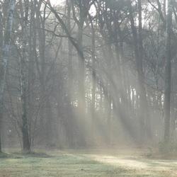 Zonneharpen in het Elsenbos