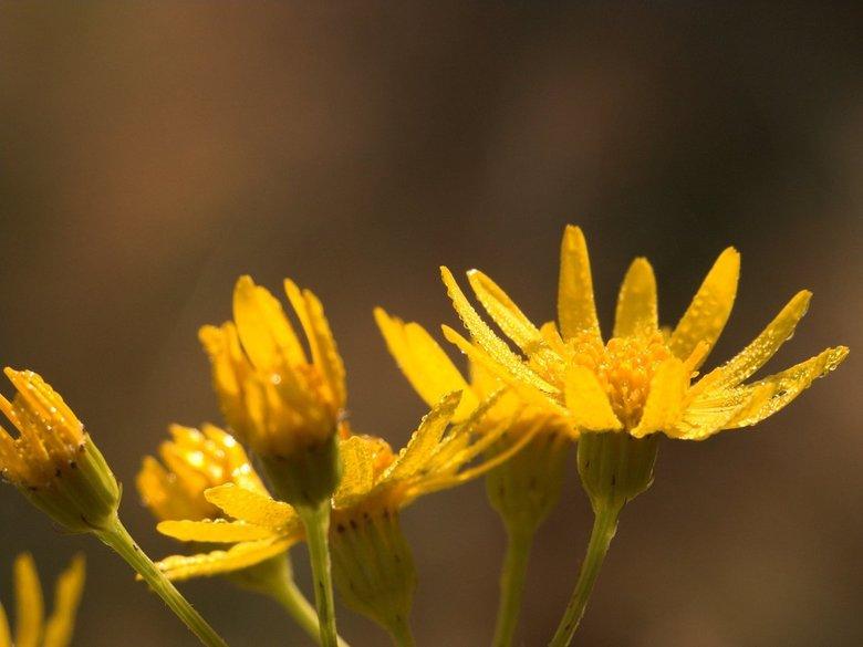 Flowers in the morning - flowers in the morning tijdens wandeling friezenberg.. niet in friesland, maar vlak bij rijssen(OV)<br /> <br /> groetjes m