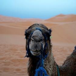 Making new friends in the desert