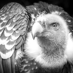 Vogelpark Avifauna (65)