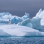 Pinguïn op ijsschots