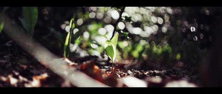 Alleen - Klein plantje in het bos.<br /> <br /> <br /> <br /> <br /> ©MotionMan 2020