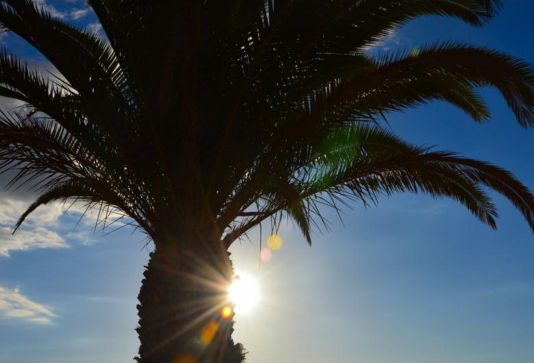 Palmtree -