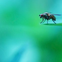 Fly(ing) High