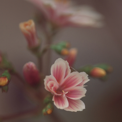 Laatste bloemenpracht in onze tuin ...