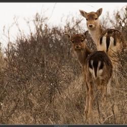 Bambi's in de AWD