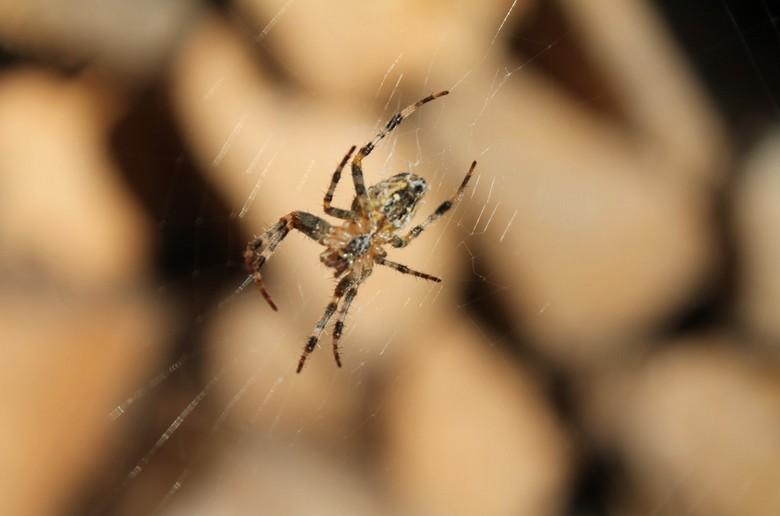 Als een spin in een web -