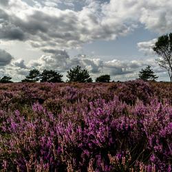 Heide landschap tussen Garderen en Harderwijk