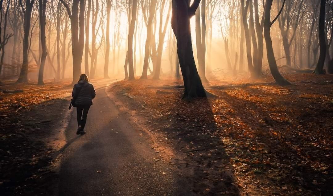 Op weg naar de dansende bomen