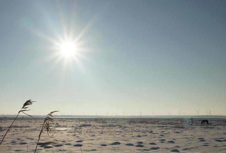 Winters Markiezaatsmeer - Genomen aan het Markiezaatsmeer nabij Bergen op Zoom. In de buurt van bezoekerscentrum de Kraaijenberg