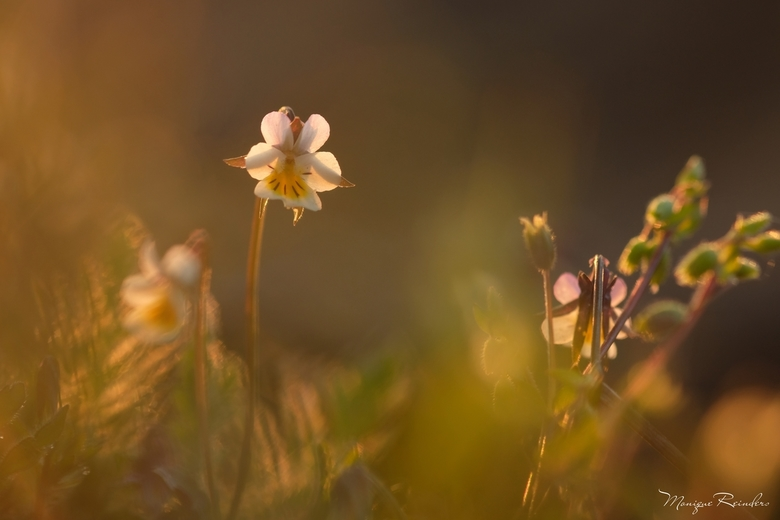 In het licht... - 'Every moment of light and dark is a miracle' - Walt Whitman