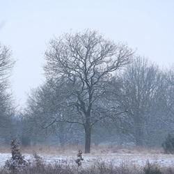 Een dun laagje sneeuw siert het landschap