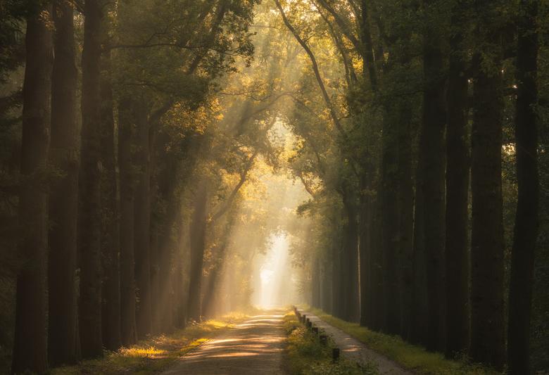 Autumn Lane - Deze foto maakte ik eigenlijk half augustus al maar nu ik wegens Corona de deur niet uit mag, leek het me leuk om het groen in de foto i
