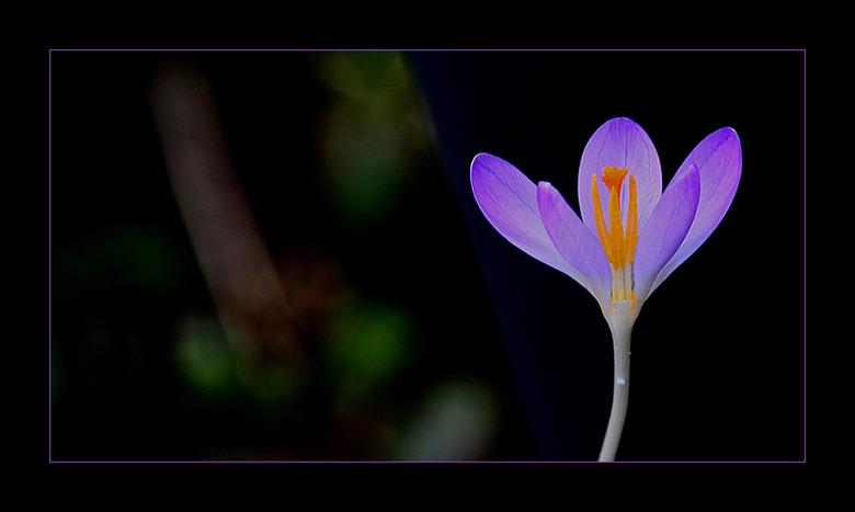 spring is in the air!!... - de lente komt er aan  !!!..<br /> gezien in de tuin..<br /> <br /> op de achtergrond vaag<br /> een  scheef staand boo