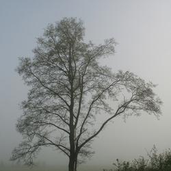 Mistige voorjaarsmorgen