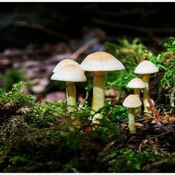 De Familie paddenstoel