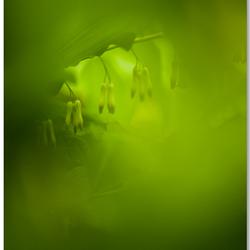 Enlightening the green