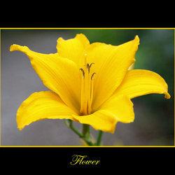 Bewerking: Flower