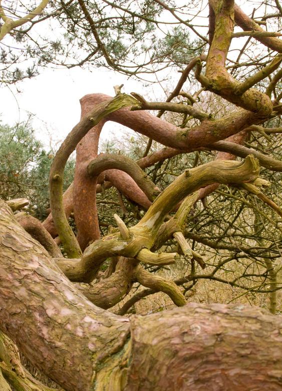 on the run..... - Deze takken zijn onderdeel van één boom. Een prachtige chaos.