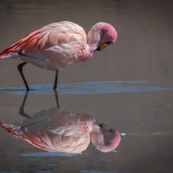 Flamingo spiegel
