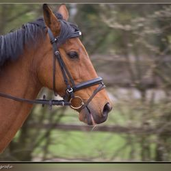 In volle galop