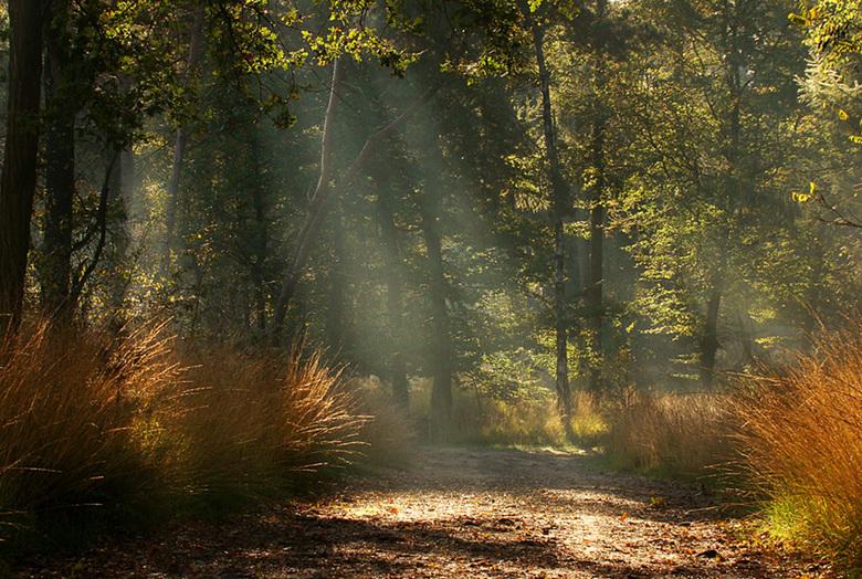 Herfststralen - Even het herfstdoosje opengetrokken.