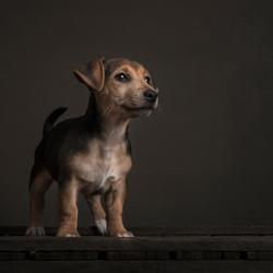 Tank, klein hondje groot karakter