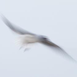 zo vrij als een vogel......