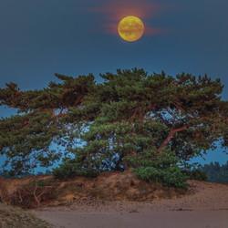 Volle maan boven het Kootwijkerzand