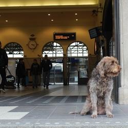 De wachtende hond (7)