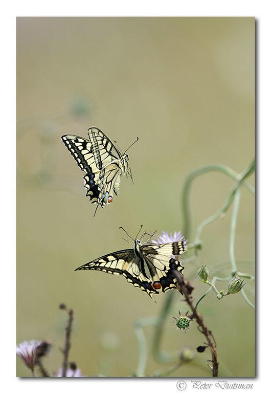 Fluttering - ..