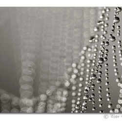 A curtain of pearls