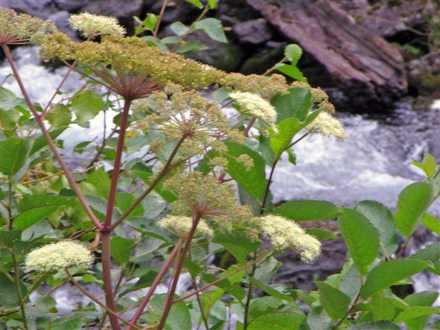 Witte bloem 02 - Foto gemaakt tijdens vakantie in Noorwegen. Augustus 2006.