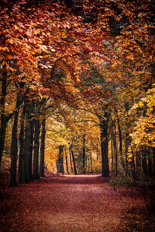Kleuren van de herfst....  - ... of toch niet helemaal?<br /> <br /> Een bewerking van de herfstkleuren in het Haagsche bos. De kleuren met contrast