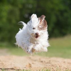 Toby 'super dog'
