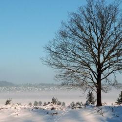 Winter op Planken Wambuis.