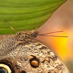 vlindertuin blijdorp