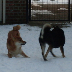 Samen spelen in de sneeuw..
