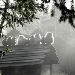 Aapjes in de mist