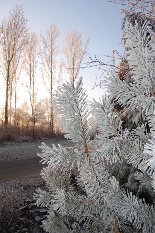 ijs boom - haarlemmermeersebos op een koude ijzige morgen twee uur later was alles weg