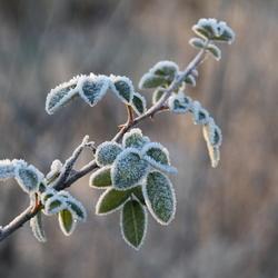 frozen leaves het blijft mooi