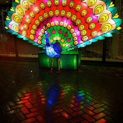 Kleurrijk China Light Pauw met Reflectie