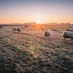 Zonsopkomst met schaapjes